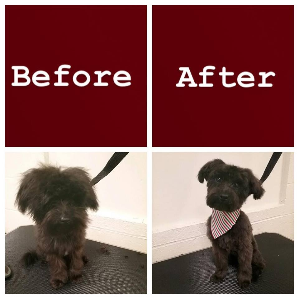 Before and after grooming has been done