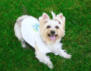 Dog having fun on the fresh green grass