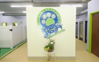 Paws play Logo on the daycare wall